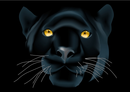 black panthers: Beautiful panther face on black background