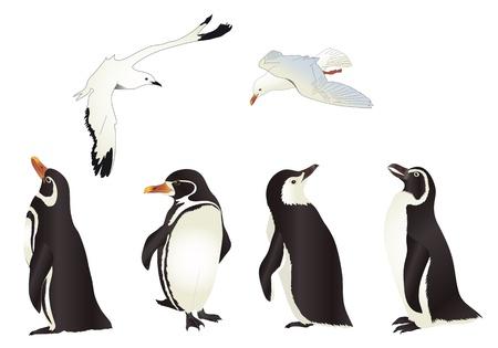 pinguino caricatura: Los ping�inos y gaviotas con gradientes simples aisladas sobre fondo blanco