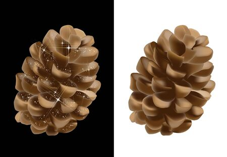 Pine cones isolated and on black background Vector