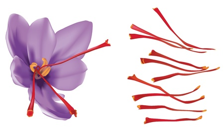 antioxidant: Saffron flower isolated on white background