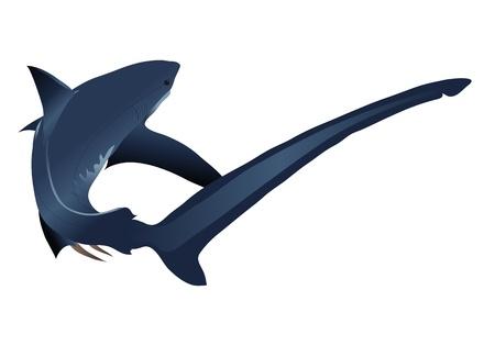 単純なグラデーションの白い背景で隔離のサメ  イラスト・ベクター素材
