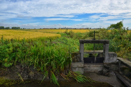 Paddy field in Italian Countryside with Weir