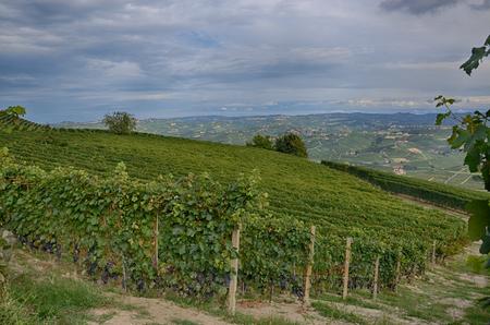 Vineyards near Barolo, Langhe region, Piedmont, Italy