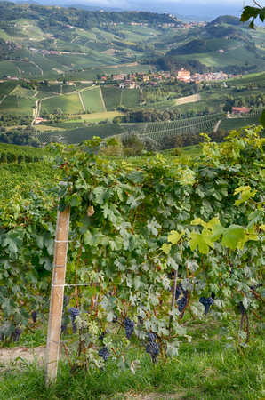 View of Barolo Village, in the Langhe region, among hills and vineyards, Piedmont, Italy