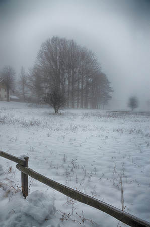 Surreal Wintry Scenery with Snow and Fog photo