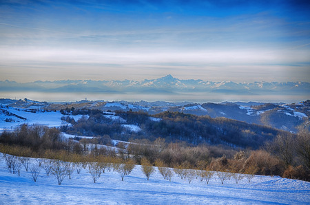 Hazel Grove under the snow in the Langhe, Italian region, with the distant Alps and the Monviso Mountain in the background