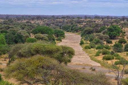 African Landscape in Tarangire National Park, Tanzania Banco de Imagens