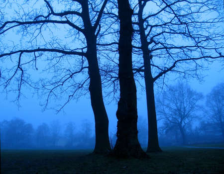 A foggy day around the blue hour.