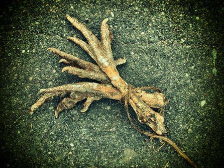 Los pies de una gallina unidos - utilizados en la brujería de edad.