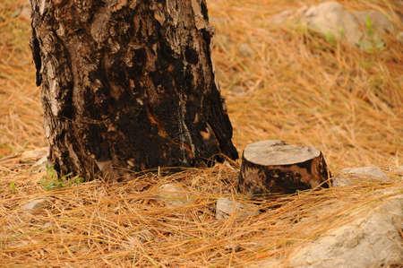 boom kappen: boom snijden grootte: 4288 * 2848, jpeg Stockfoto