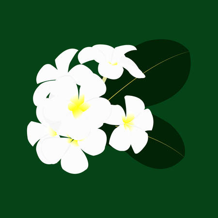 White and yellow Plumeria Flowers illustration.