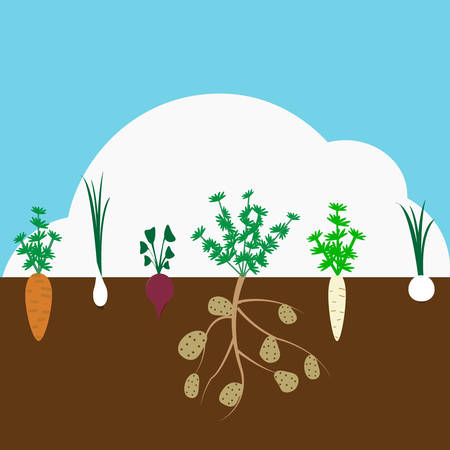 Vegetable garden banner organic and healthy food poster with root veggies.