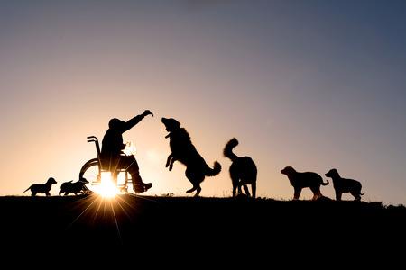 crazy people: amor de los perros de las personas con discapacidad