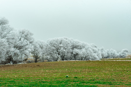 ambiance: beauty of winter, ambiance Frost Stock Photo