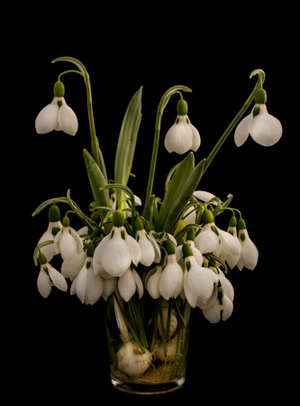 snowdrop flowers in glass Stock Photo