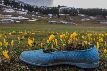 Harbingers of spring wildflowers Imagens