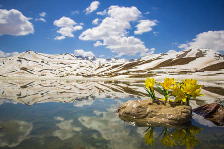 harbinger: harbinger of spring flowers and mountains reflection Stock Photo