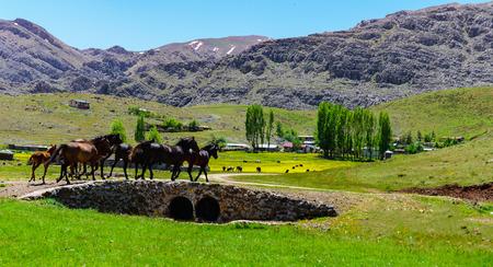 free horses and Highland life