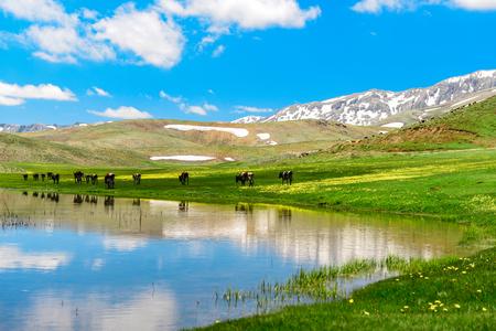 Highland scenery and animal husbandry Stock Photo