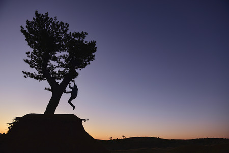 lighthearted: branches of the tree adventure Stock Photo