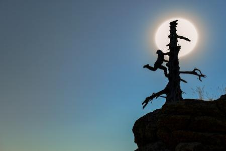 lighthearted: adventurous climbers climbing tree