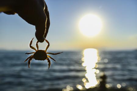 sunrises: crab and sunrises Stock Photo