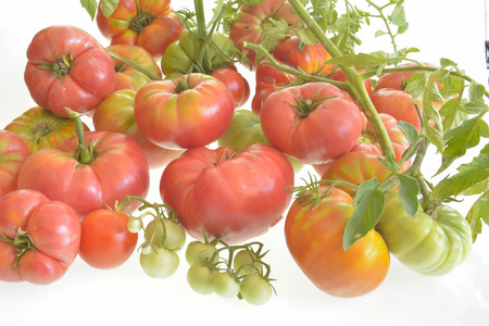 pure organic tomatoes
