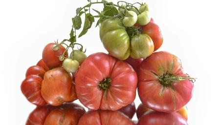 plants species: pomodori biologici naturali Archivio Fotografico