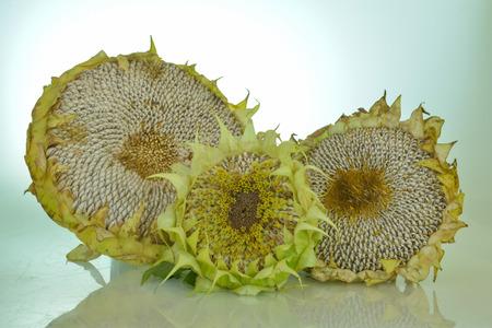 sunflower seeds: organic sunflower seeds