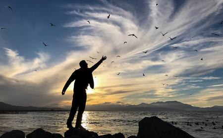 love the seagulls