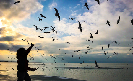 relevance: gulls, peace and entertainment Stock Photo