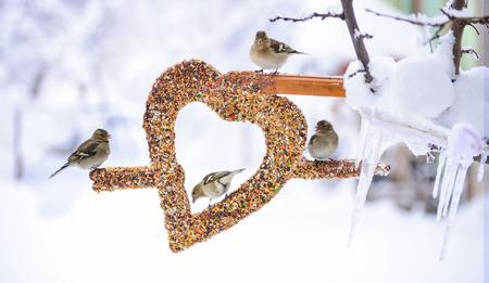 Wild birds love the creative concept