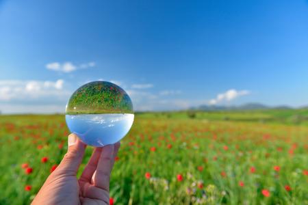 environmentalism: poppy field landscape in reverse