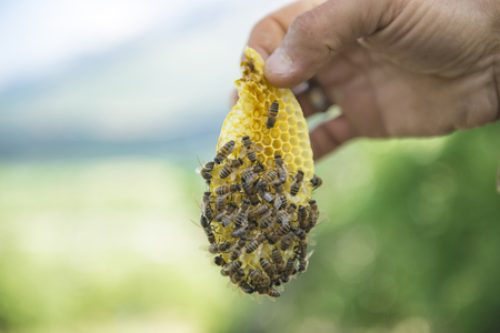 stage production of natural honey.The future of the beekeeping sector