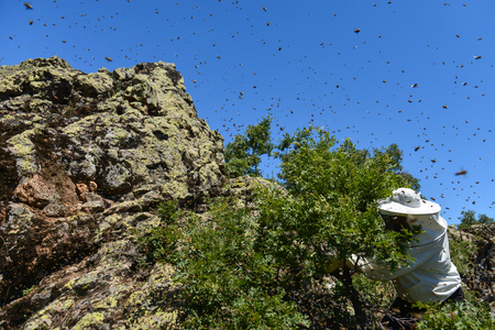 Swarms of aggressive bees