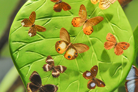 butterfly collecting and rich variety Stock Photo