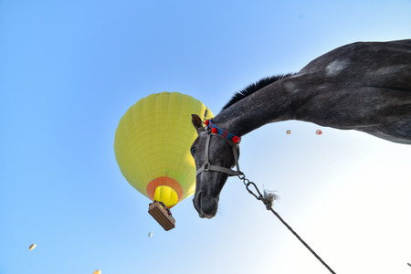 baloons in the sky and the psychological gaze of the horse Stock Photo