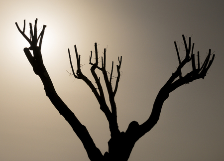 tree grafting, pruning and maintenance
