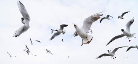 energetic lake gull Stok Fotoğraf
