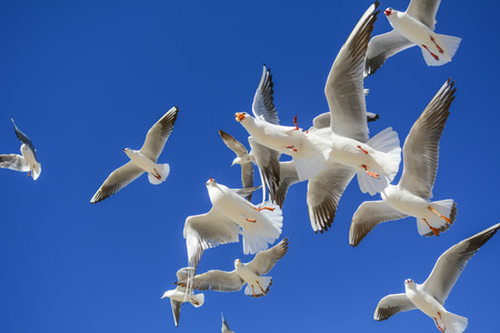 cute seagulls flying by the lake