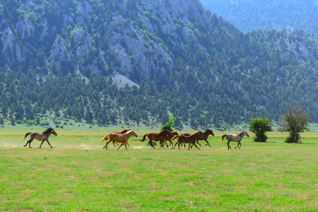 galloping wild horses in nature Stok Fotoğraf