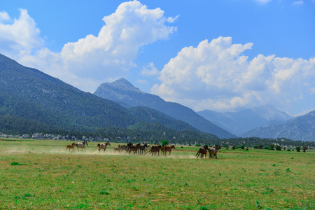galloping wild horses in nature and wildlife areas Stok Fotoğraf