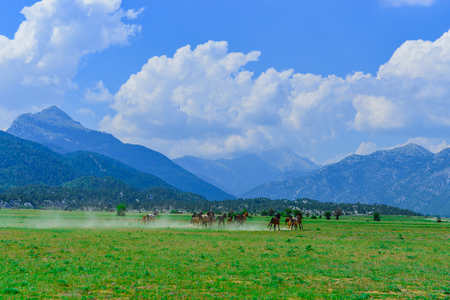 galloping wild horses in nature and wildlife areas Stok Fotoğraf - 118955060