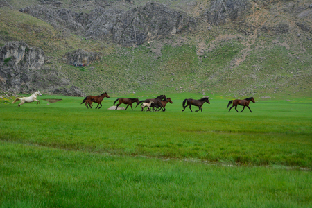 wild horses of nature, magnificent galloping and spring season Stok Fotoğraf