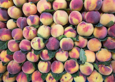 commercial sales department of peach fruit