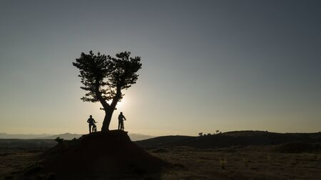 discovery trip for cyclists, single tree, exploration and adventure in nature