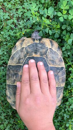 touch and love natures cute animal turtle