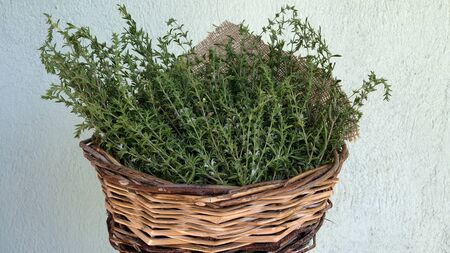 Thyme is taken by mouth for bronchitis, whooping cough, sore throat, colic, arthritis, upset stomach, stomach pain (gastritis), diarrhea, bedwetting, a movement disorder in children (dyspraxia), intestinal gas (flatulence), parasitic worm infections, and skin disorders. It is also used to increase urine flow (as a diuretic), to disinfect the urine, and as an appetite stimulant.
