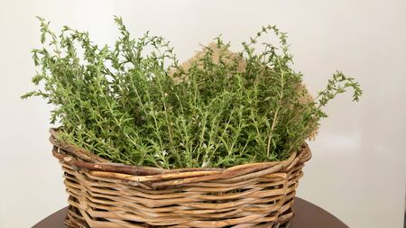 Thyme is a Mediterranean herb with dietary, medicinal, and ornamental uses. The flowers, leaves, and oil of thyme have been used to treat a range of symptoms and complaints.