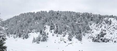 dense woodland and insatiable taste of winter landscapes Banco de Imagens
